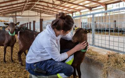 Nuestra ganadería ecológica.
