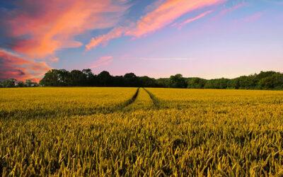 Agricultura ecológica, ¿qué es y qué no?